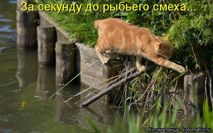 Котоматрица: За секунду до рыбьего смеха...