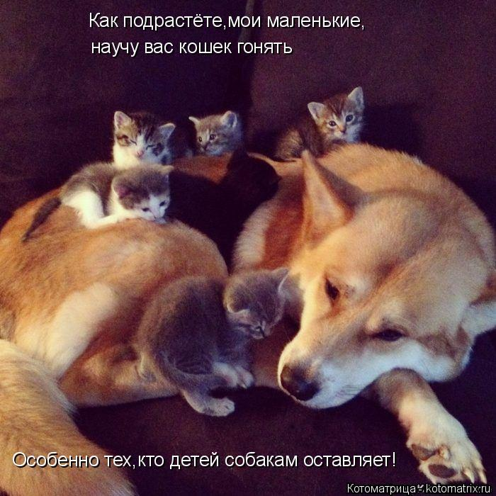 Котоматрица: Как подрастёте,мои маленькие, научу вас кошек гонять Особенно тех,кто детей собакам оставляет!