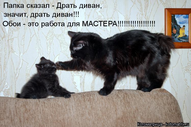 Котоматрица: Папка сказал - Драть диван, значит, драть диван!!! Обои - это работа для МАСТЕРА!!!!!!!!!!!!!!!!!!