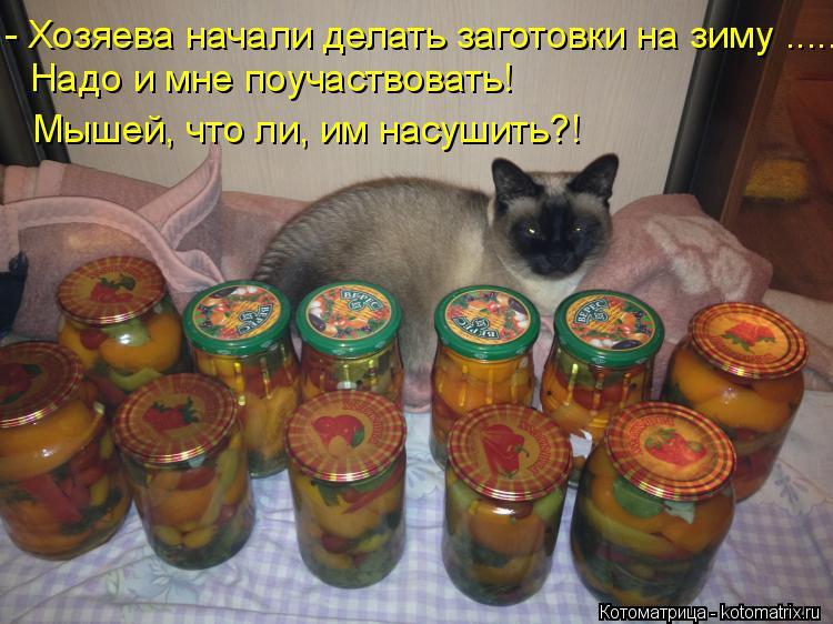 Котоматрица: - Хозяева начали делать заготовки на зиму ..... Надо и мне поучаствовать! Мышей, что ли, им насушить?!