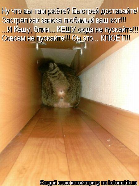 Котоматрица: Ну что вы там ржёте? Быстрей доставайте! Застрял как заноза любимый ваш кот!!! ...И Кешу, блин... КЕШУ сюда не пускайте!!! - Совсем не пускайте!!! Он