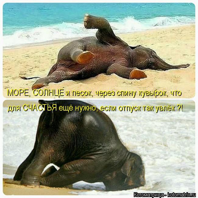 Котоматрица: МОРЕ, СОЛНЦЕ и песок, через спину кувырок, что для СЧАСТЬЯ ещё нужно, если отпуск так увлёк ?!