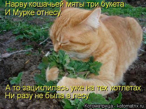 Котоматрица: Нарву кошачьей мяты три букета И Мурке отнесу. А то зациклилась уже на тех котлетах. Ни разу не была в лесу.