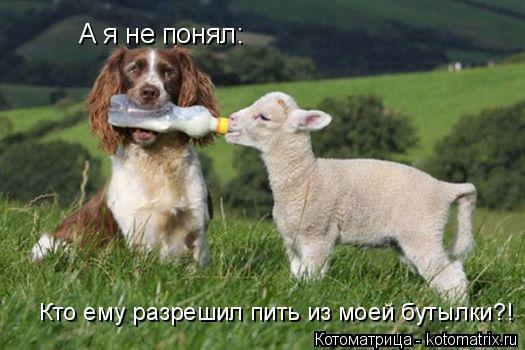 Котоматрица: А я не понял:  Кто ему разрешил пить из моей бутылки?!