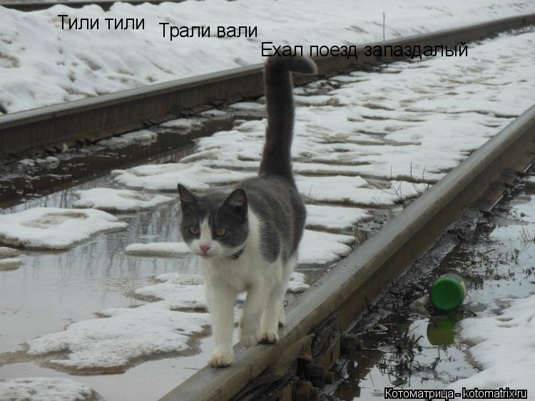 Котоматрица: Тили тили Трали вали Ехал поезд запаздалый