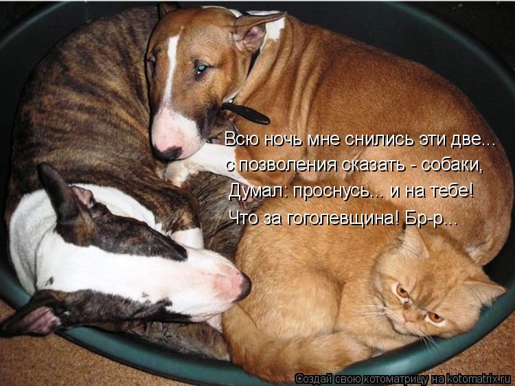 Котоматрица: Всю ночь мне снились эти две...  с позволения сказать - собаки, Думал: проснусь... и на тебе! Что за гоголевщина! Бр-р...