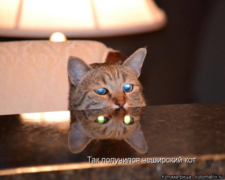 Котоматрица: Так получился чеширский кот