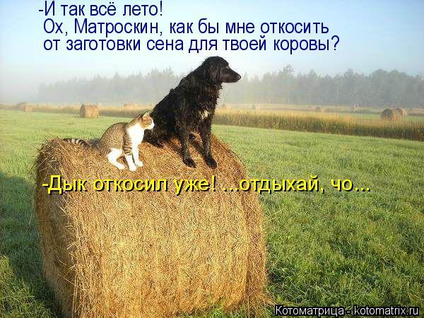 Котоматрица: -И так всё лето! Ох, Матроскин, как бы мне откосить от заготовки сена для твоей коровы? -Дык откосил уже! ...отдыхай, чо...