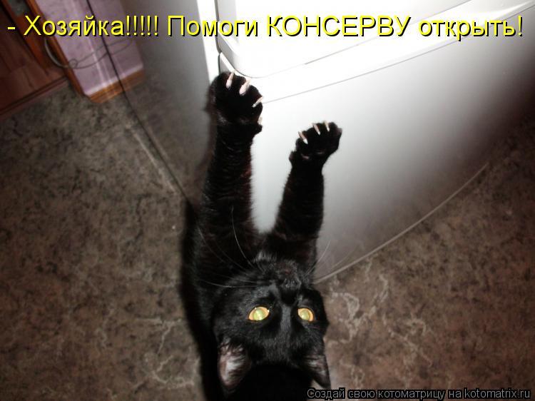 Котоматрица: - Хозяйка!!!!! Помоги КОНСЕРВУ открыть!