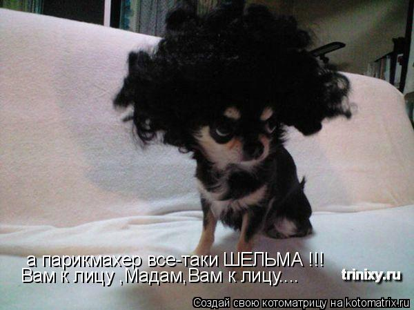 Котоматрица: а парикмахер все-таки ШЕЛЬМА !!! Вам к лицу ,Мадам,Вам к лицу....