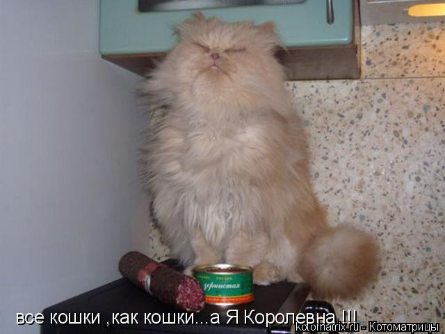 Котоматрица: все кошки ,как кошки...а Я Королевна !!!