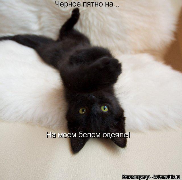 Котоматрица: Черное пятно на... На моем белом одеяле!