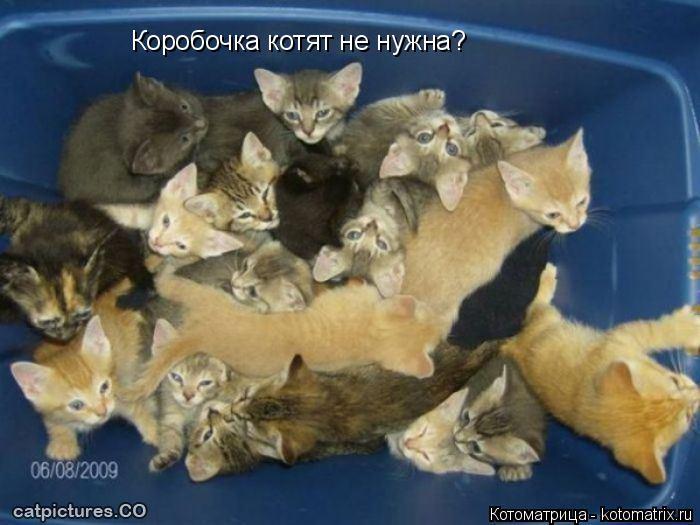 Котоматрица: Коробочка котят не нужна?