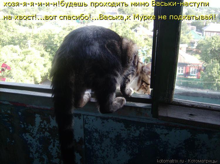 Котоматрица: хозя-я-я-и-и-н!будешь проходить мимо Васьки-наступи на хвост!...вот спасибо!...Васька,к Мурке не подкатывай!