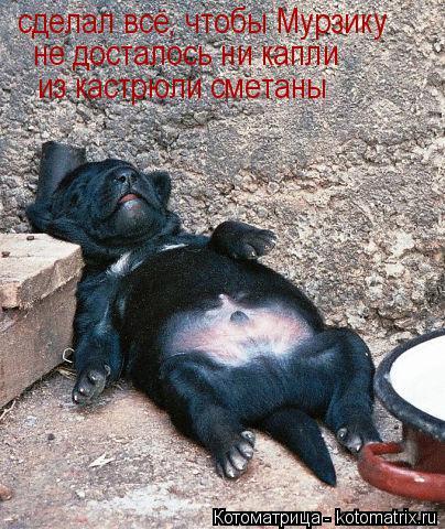 Котоматрица: сделал всё, чтобы Мурзику не досталось ни капли из кастрюли сметаны