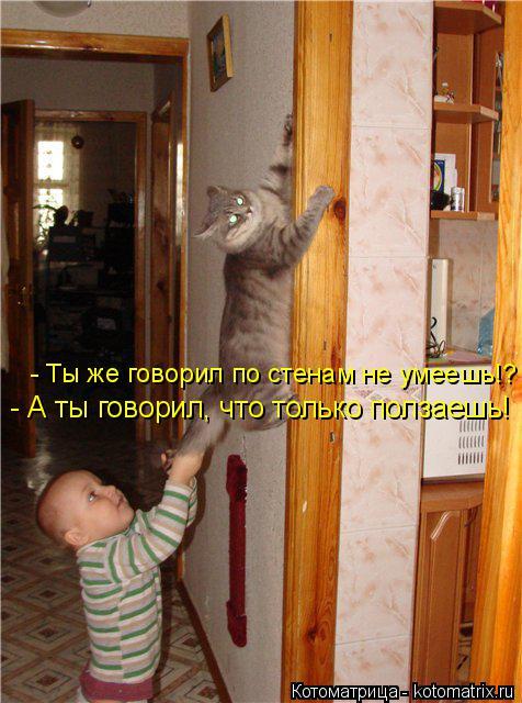 Котоматрица: - Ты же говорил по стенам не умеешь!? - А ты говорил, что только ползаешь!