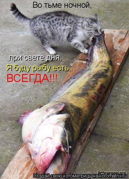 Котоматрица: Во тьме ночной, при свете дня, Я буду рыбу есть... ВСЕГДА!!!