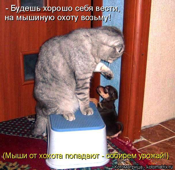 Котоматрица: - Будешь хорошо себя вести, на мышиную охоту возьму! (Мыши от хохота попадают - собирем урожай!)