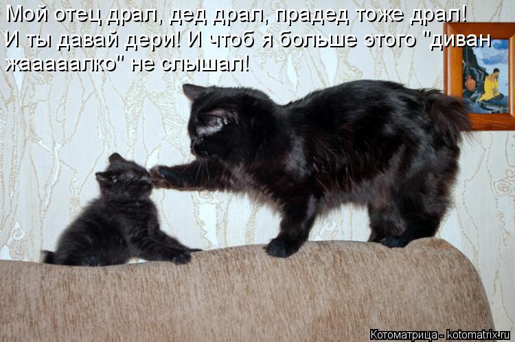 """Котоматрица: Мой отец драл, дед драл, прадед тоже драл! И ты давай дери! И чтоб я больше этого """"диван жааааалко"""" не слышал!"""