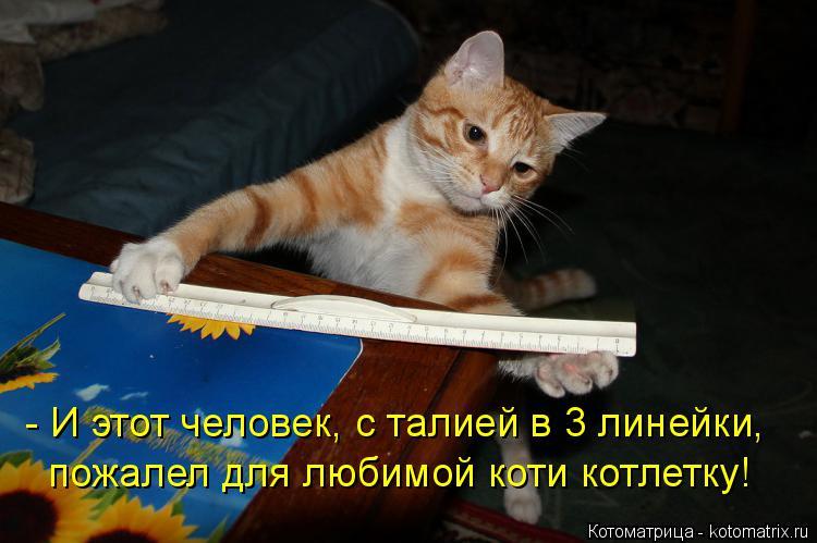 Котоматрица: - И этот человек, с талией в 3 линейки,  пожалел для любимой коти котлетку!