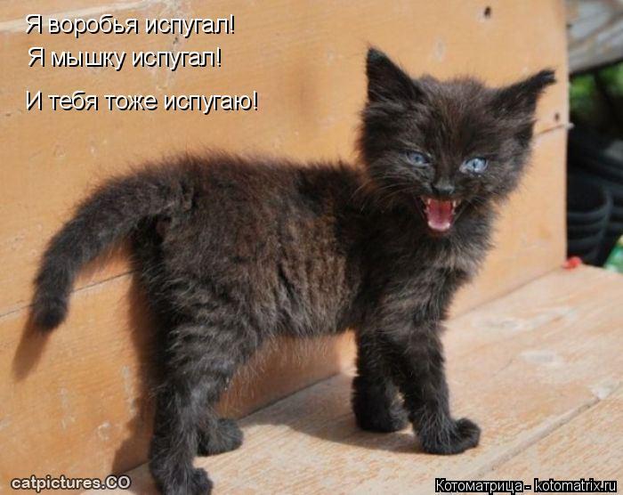 Котоматрица: Я воробья испугал! Я мышку испугал! И тебя тоже испугаю!