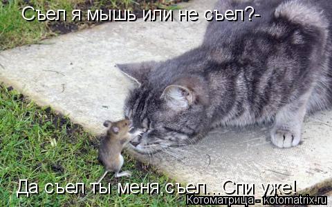 Котоматрица: Съел я мышь или не съел?- Да съел ты меня,съел...Спи уже!