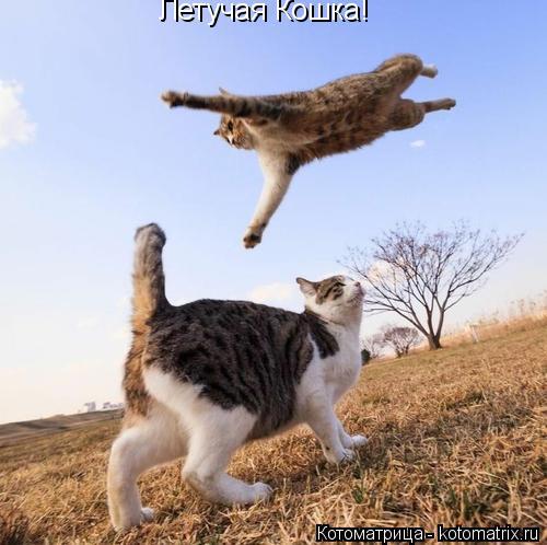 Котоматрица: Летучая Кошка!