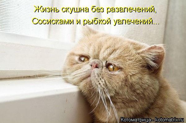 Котоматрица: Жизнь скушна без развлечений, Сосисками и рыбкой увлечений...