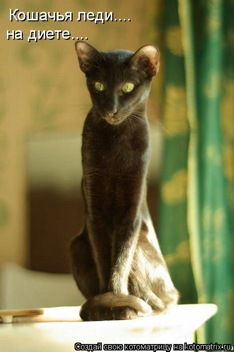 Котоматрица: Кошачья леди.... на диете....
