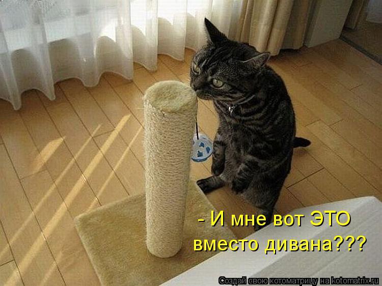 Котоматрица: - И мне вот ЭТО  вместо дивана???