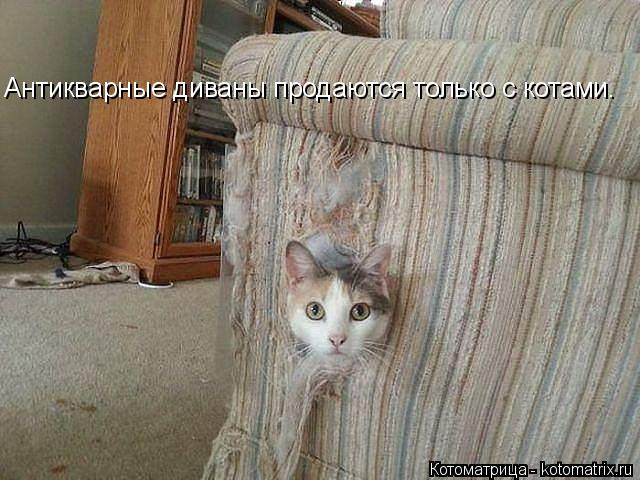 Котоматрица: Антикварные диваны продаются только с котами.