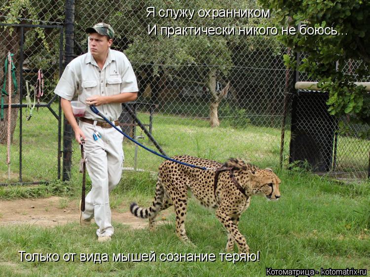 Котоматрица: Я служу охранником И практически никого не боюсь... Только от вида мышей сознание теряю!