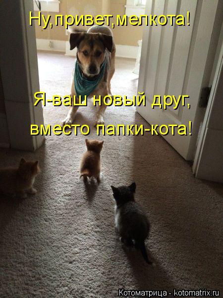 Котоматрица: Ну,привет,мелкота! Я-ваш новый друг, вместо папки-кота!