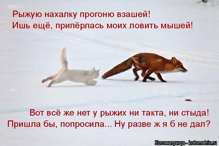 Котоматрица: Рыжую нахалку прогоню взашей! Ишь ещё, припёрлась моих ловить мышей! Вот всё же нет у рыжих ни такта, ни стыда! Пришла бы, попросила... Ну разве