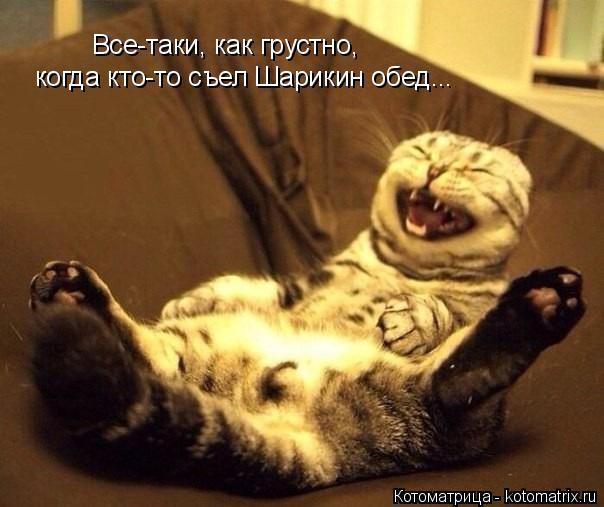 Котоматрица: Все-таки, как грустно, когда кто-то съел Шарикин обед...