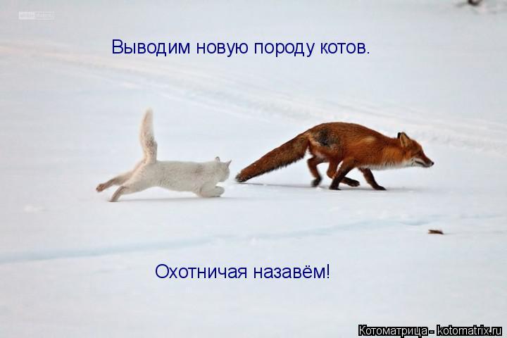 Котоматрица: Выводим новую породу котов. Охотничая назавём!