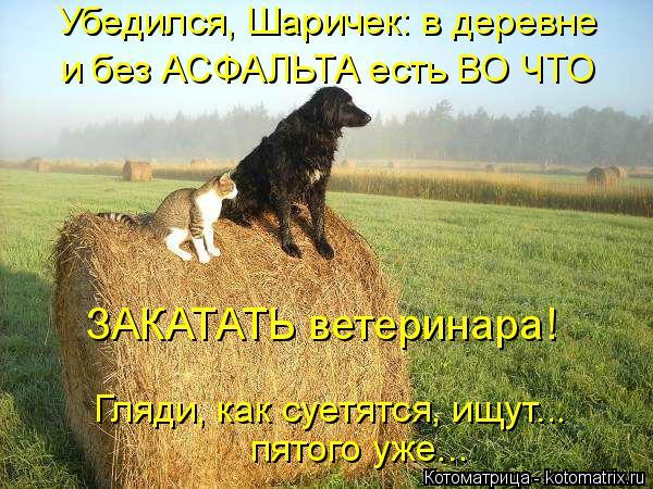 Котоматрица: Убедился, Шаричек: в деревне  и без АСФАЛЬТА есть ВО ЧТО Гляди, как суетятся, ищут... пятого уже... ЗАКАТАТЬ ветеринара!
