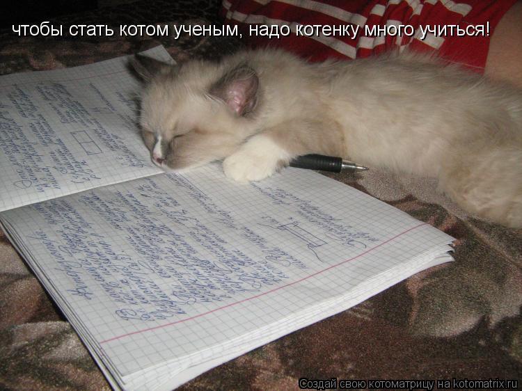 Котоматрица: чтобы стать котом ученым, надо котенку много учиться!
