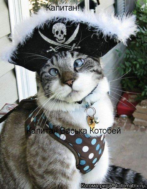 Котоматрица: Капитан! Капитан Васька Котобей