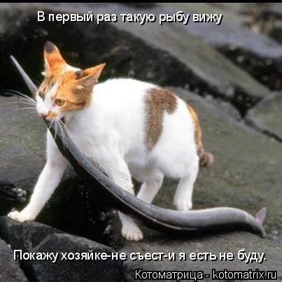 Котоматрица: В первый раз такую рыбу вижу Покажу хозяйке-не съест-и я есть не буду.