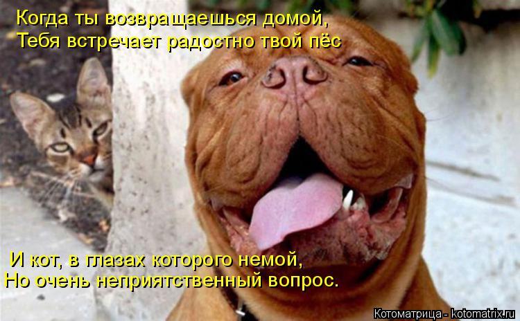Котоматрица: Когда ты возвращаешься домой, Тебя встречает радостно твой пёс И кот, в глазах которого немой, Но очень неприятственный вопрос.