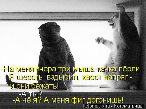 Котоматрица: -На меня вчера три мыша-качка пёрли. Я шерсть  вздыбил, хвост напряг - и они бежать! -А чё я? А меня фиг догонишь! -А ты?