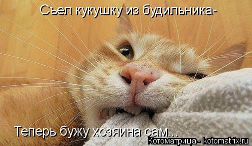 Котоматрица: Съел кукушку из будильника- Теперь бужу хозяина сам...