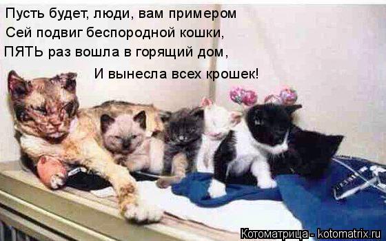 Котоматрица: Пусть будет, люди, вам примером Сей подвиг беспородной кошки, ПЯТЬ раз вошла в горящий дом, И вынесла всех крошек!