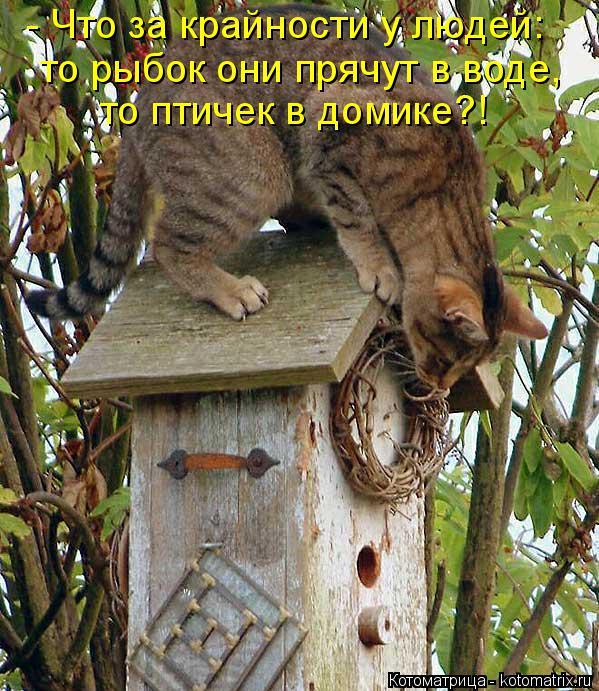 Котоматрица: то рыбок они прячут в воде,  то птичек в домике?!  - Что за крайности у людей: