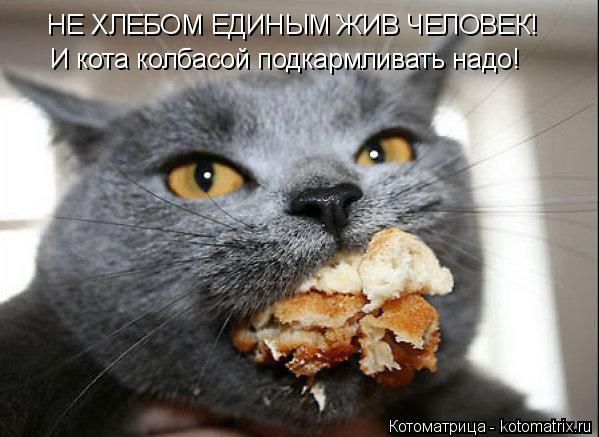 Котоматрица: НЕ ХЛЕБОМ ЕДИНЫМ ЖИВ ЧЕЛОВЕК! И кота колбасой подкармливать надо!