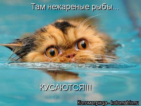 Котоматрица: Там нежареные рыбы... КУСАЮТСЯ!!!