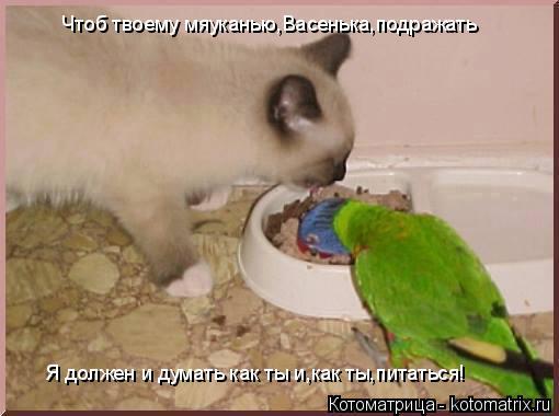 Котоматрица: Чтоб твоему мяуканью,Васенька,подражать Я должен и думать как ты и,как ты,питаться!