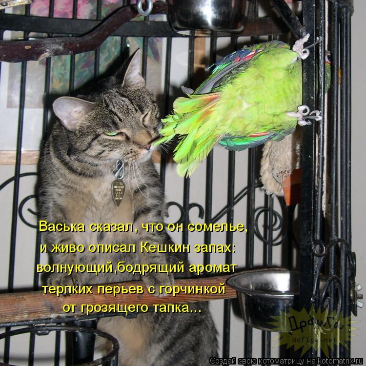 Котоматрица: Васька сказал, что он сомелье, волнующий,бодрящий аромат  и живо описал Кешкин запах: терпких перьев с горчинкой от грозящего тапка...