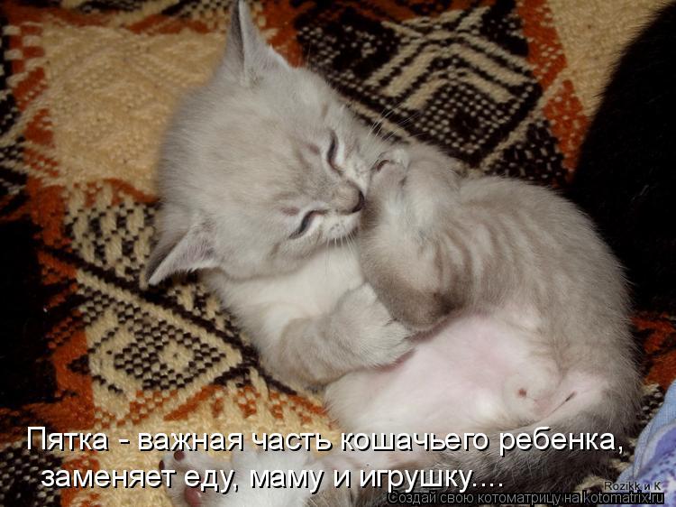 Котоматрица: Пятка - важная часть кошачьего ребенка,   заменяет еду, маму и игрушку....